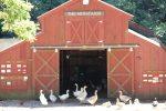 The Mini-Farm